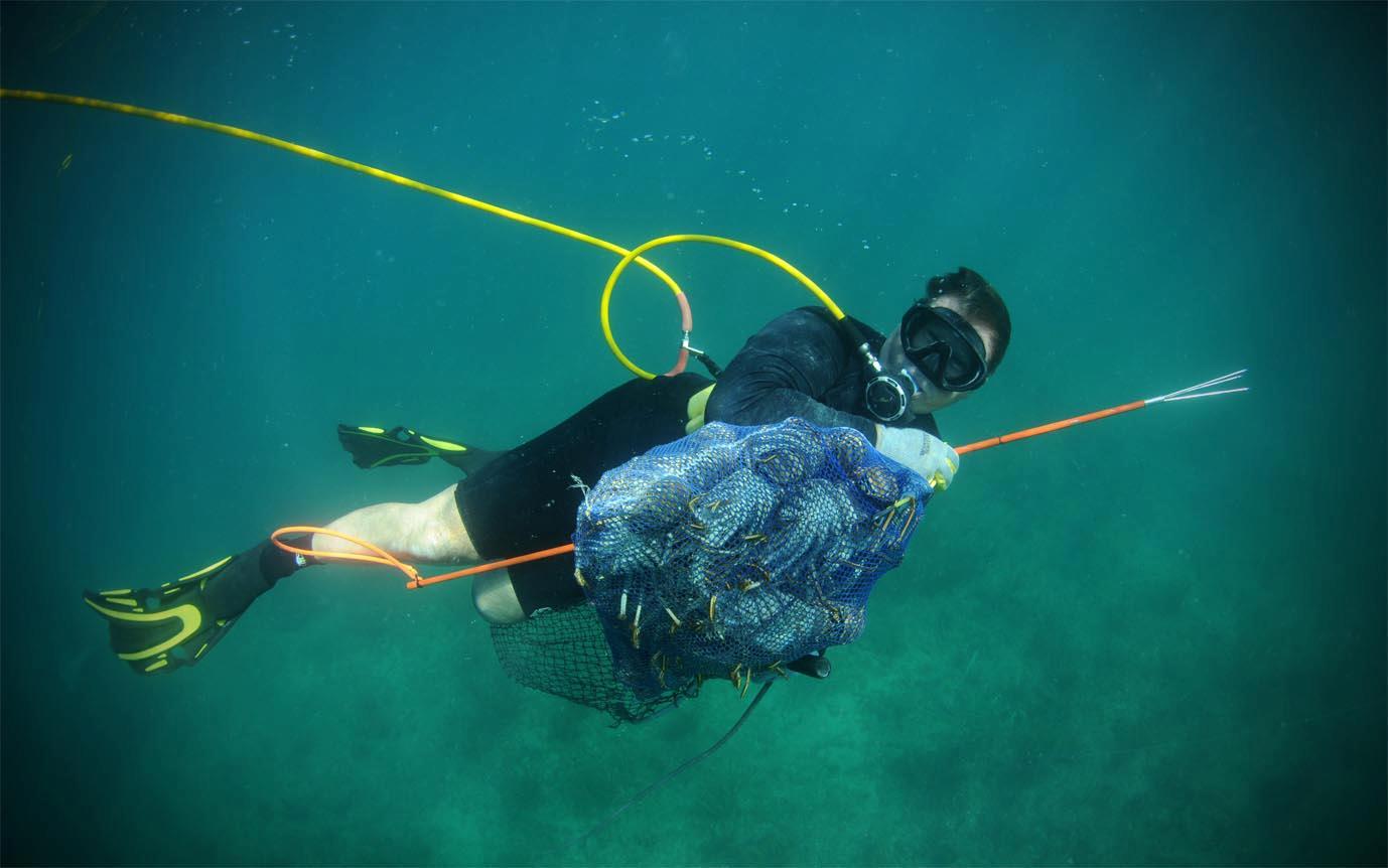 Lobster Diving Jason Arnold Mercury Marine